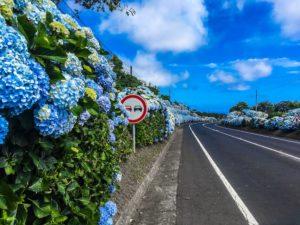 Paysages colorés aux Açores - globetrottair.ch