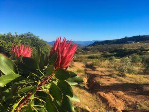 Paysage fleuri en Afrique