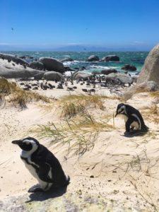 Pinguins en Afrique