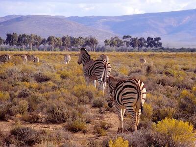 Voyage Safari guidé en Afrique du Sud